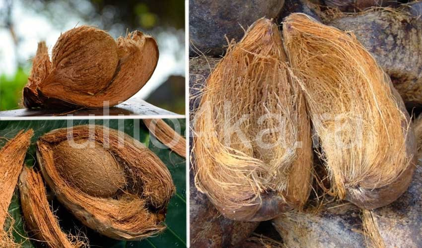 кокосовый субстрат